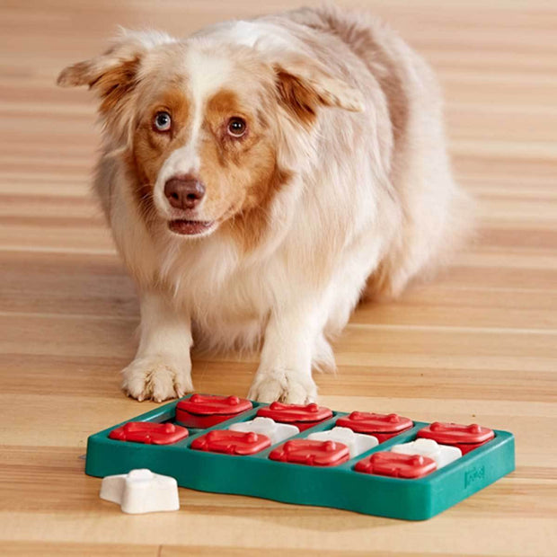 Dog Brick Puzzle Game Dog Toy - Intermediate | Pawlicious & Company