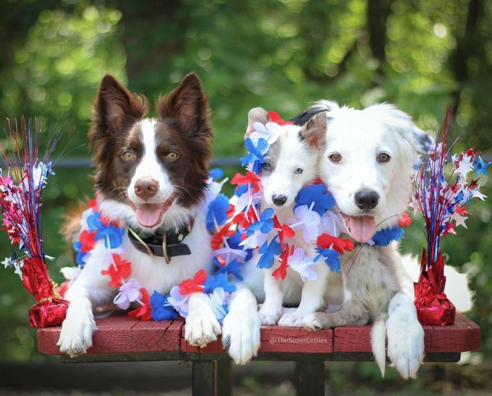 Preparing Your Dog for July 4th