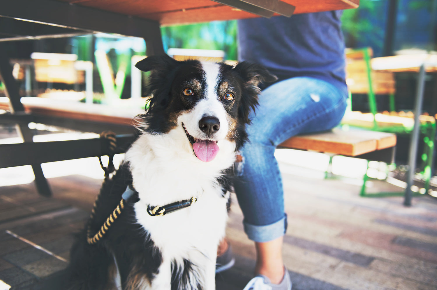 Patio Etiquette - Dining With Your Dog