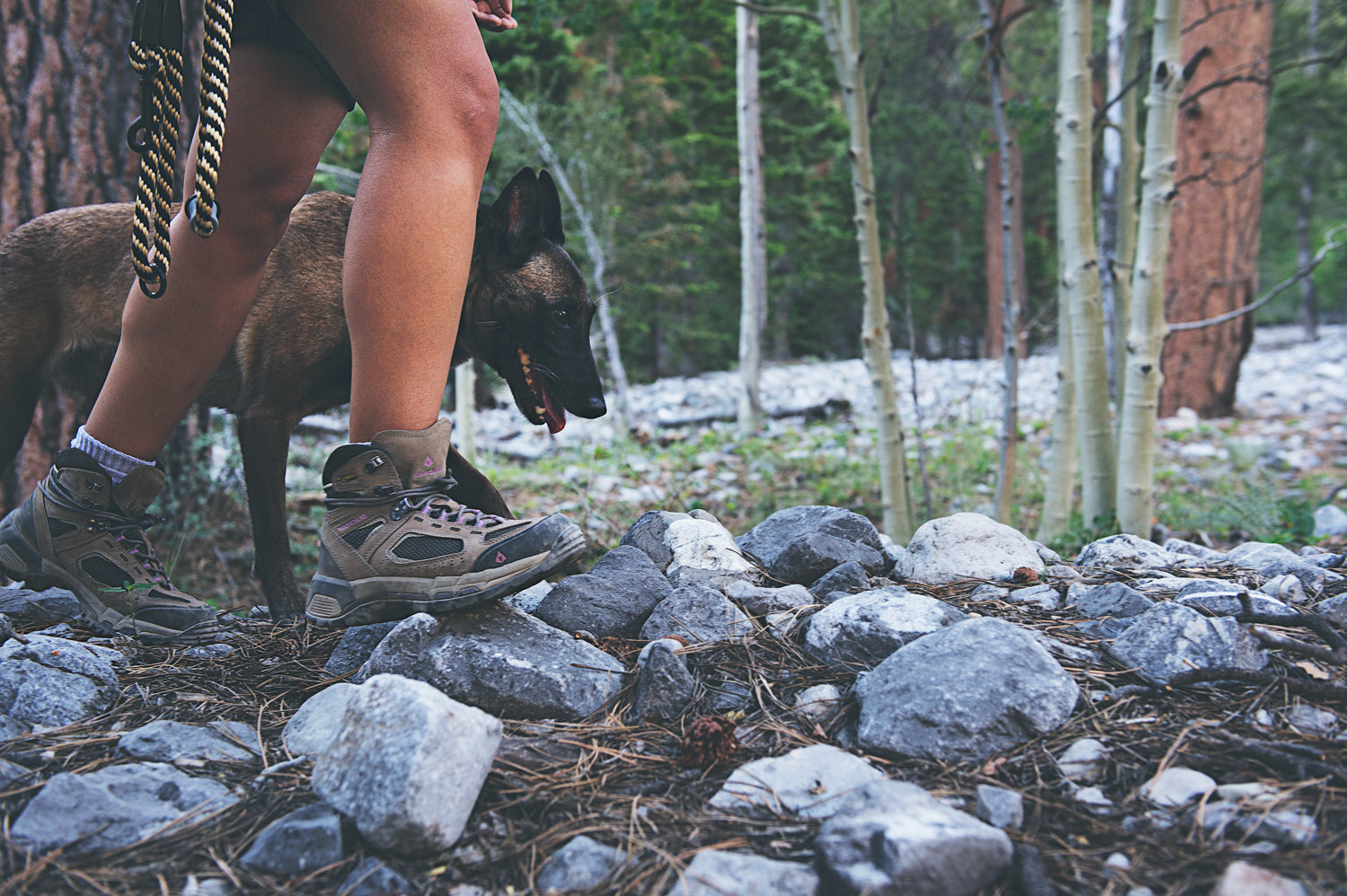 Solo Hiking with Your Dog