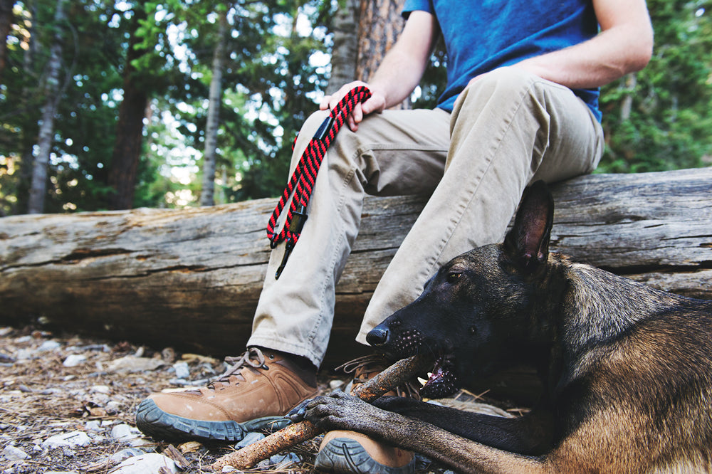 25 Reasons Dogs Are the BEST Camping Companions