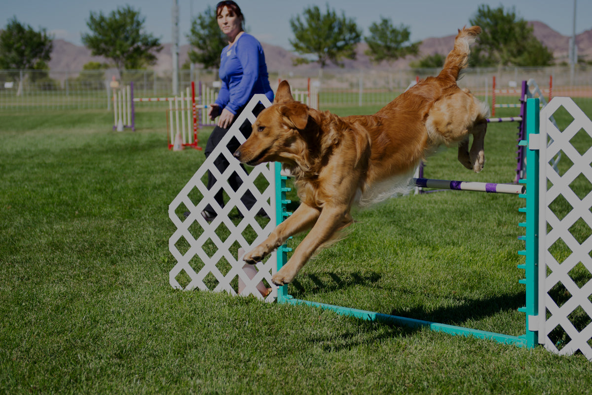 5 Sports To Try With Your Dog This Spring