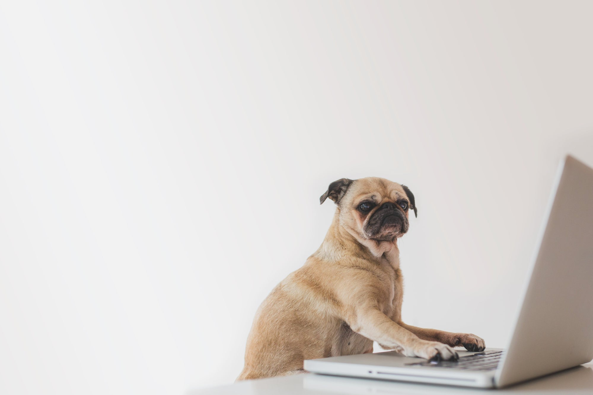 Office Dog Etiquette: Everything You Need To Know