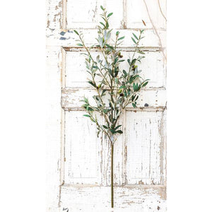 Olive Branch Stems