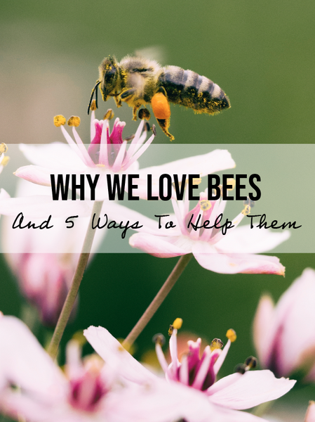 Why We Love Bees: And 5 Things You Can Do To Help Them