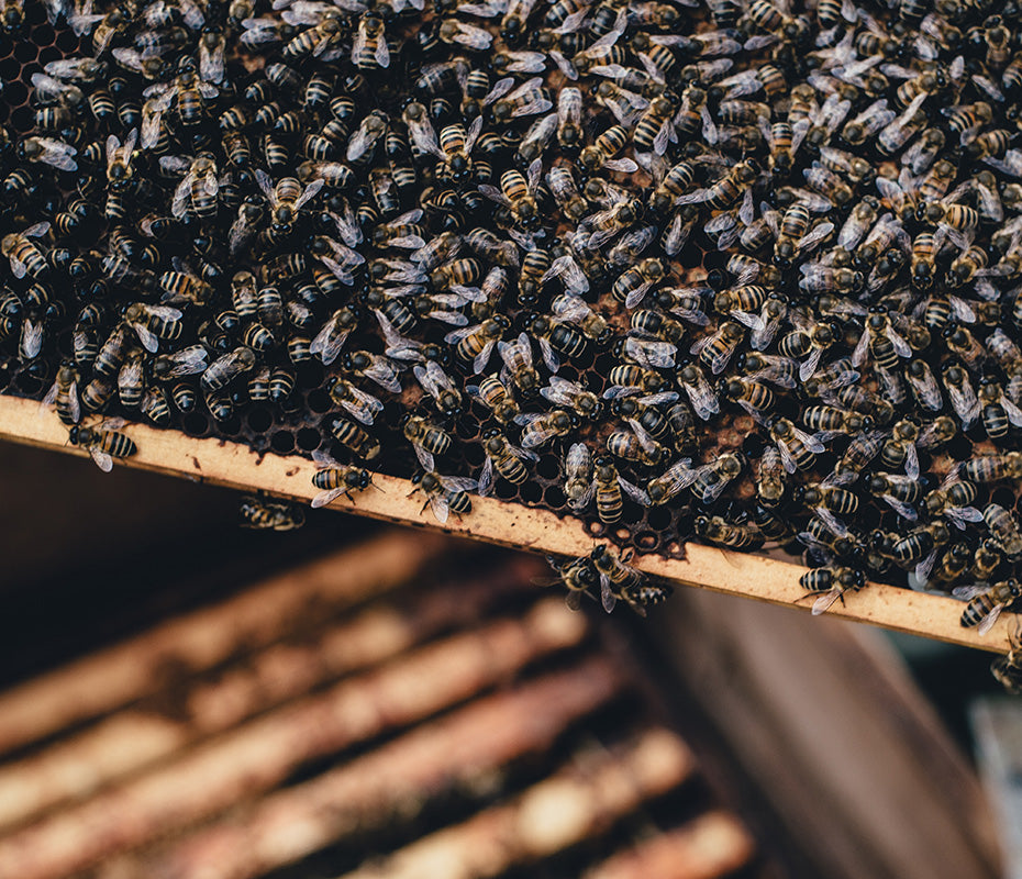 naked-foods-why-bees-are-important