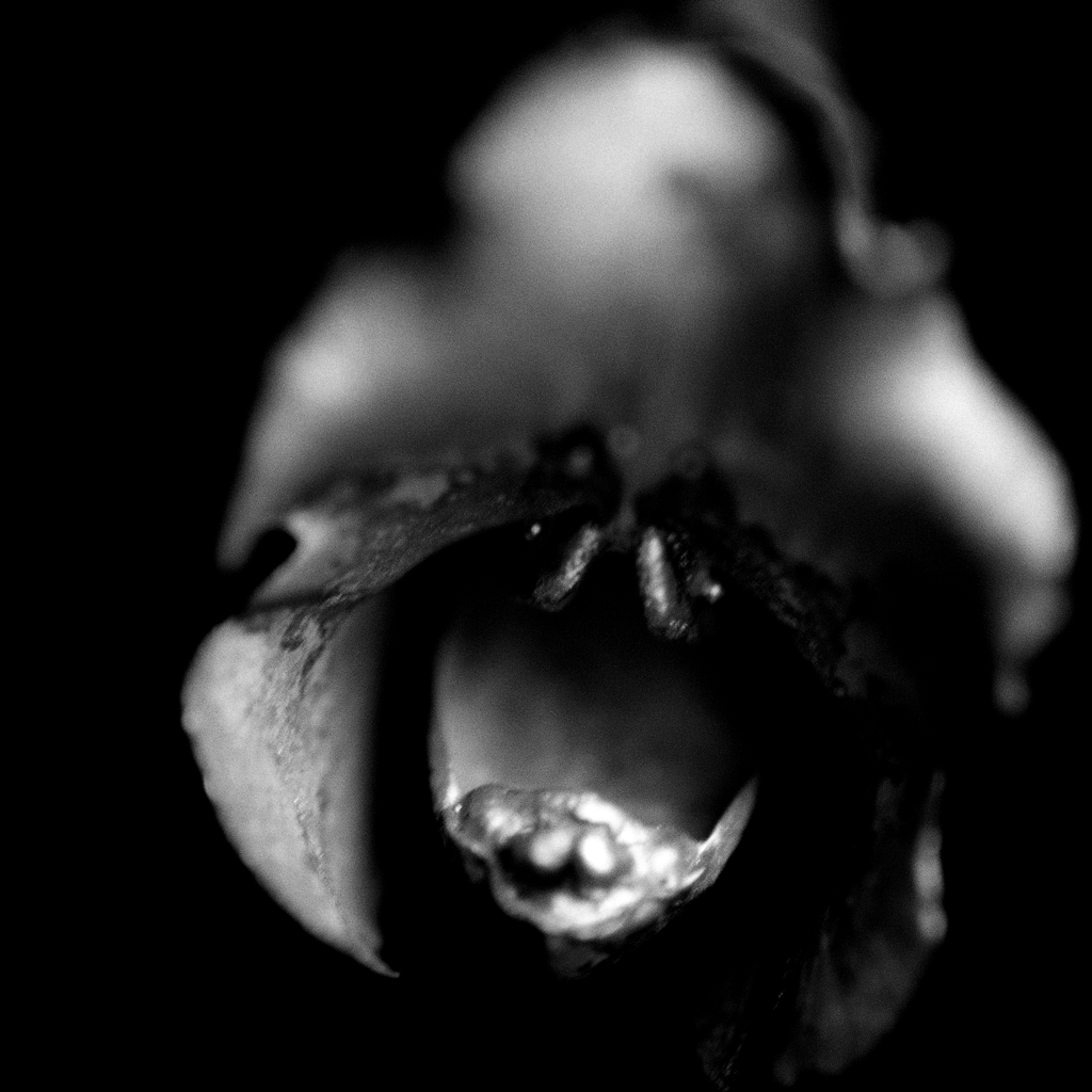 Photograph Orchid