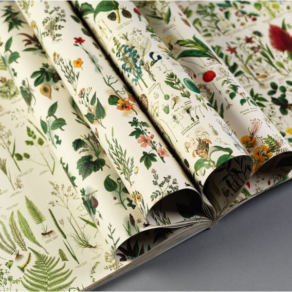 Pepin Press-Gift and Creative Papers Book-Flora