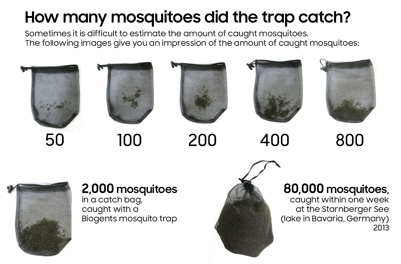 How many mosquitoes did the trap catch?