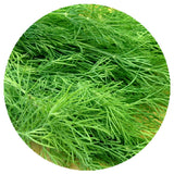 Freeze-Dried Dill Tips