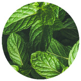 Freeze Dried Green Mint Cut