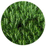 Freeze-Dried Rosemary Cut