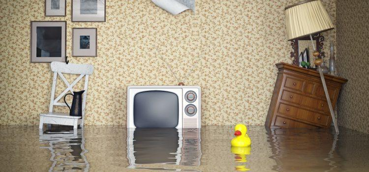 How to get rid of mould after flood or heavy rain