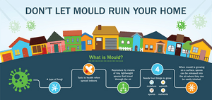 Mould removal infographic: Don't let mould ruin your home