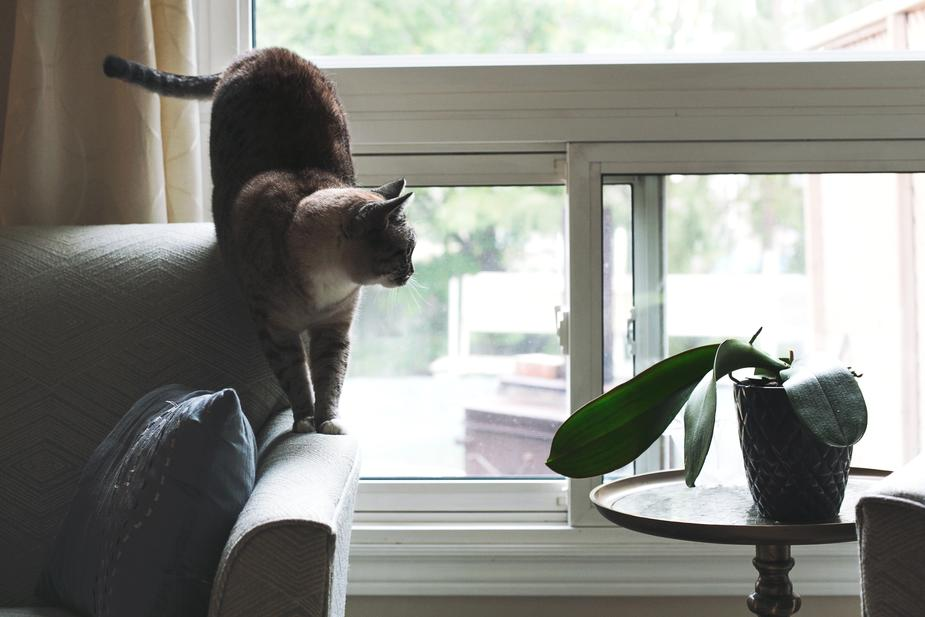 living with cats and dogs for asthma allergy sufferers