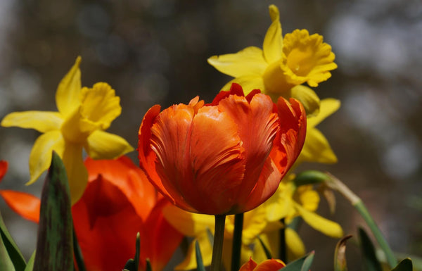 Time to spring into action by planting bulbs for next year. - Gardenesque