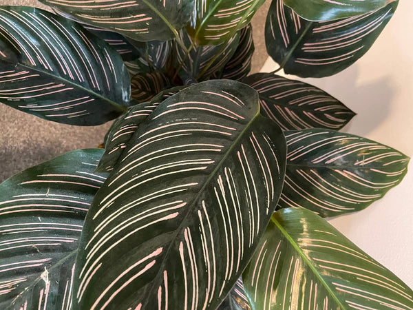 How to care for your houseplants over winter - Gardenesque