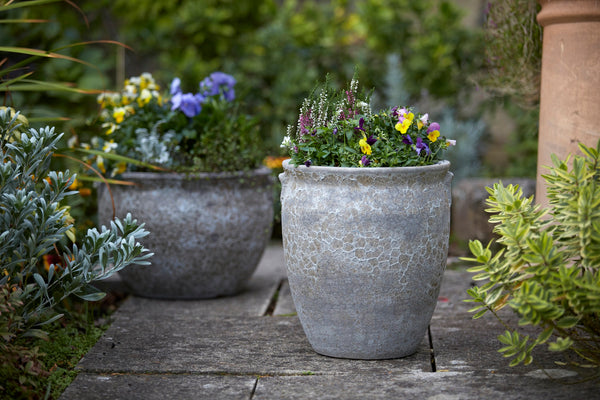 Make the most of your city garden with container planting