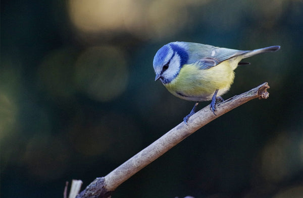 Choosing the right bird feeder and food for your garden