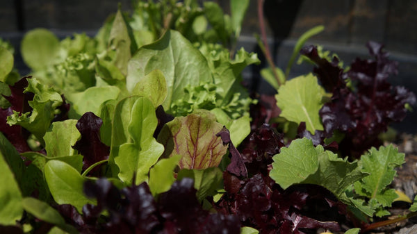 Grow Your Own series - Grow your own summer salad