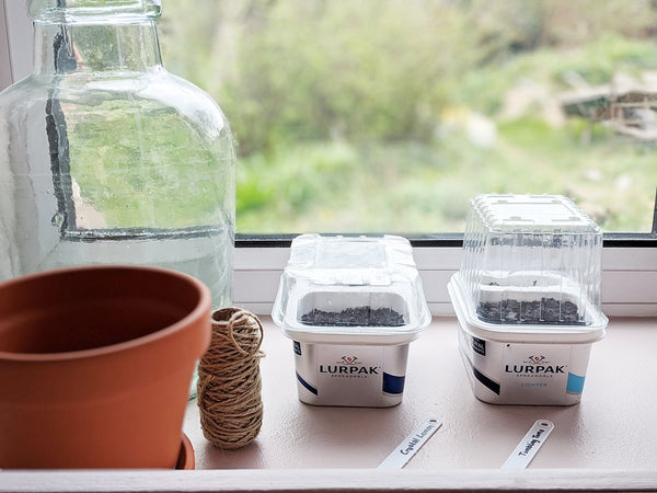 Growing a Windowsill Garden: How to create a DIY Propagator Reusing Household Waste - Gardenesque