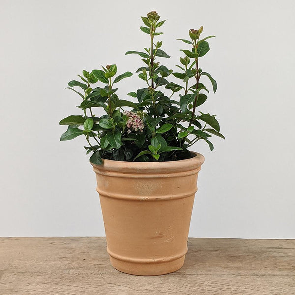 Tullia XXL Terracotta Garden Pot - 5 Sizes - Gardenesque