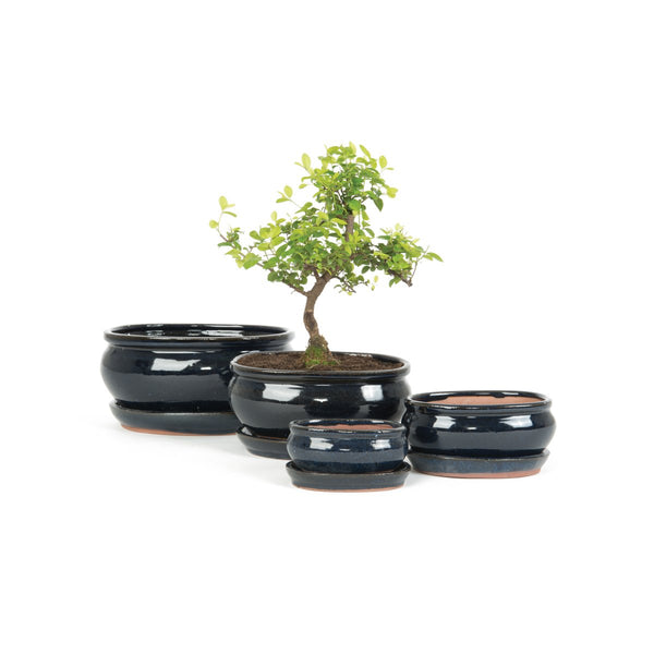 Xashi Oval Bonsai Pot & Saucer Set - 4 Sizes Available - Gardenesque