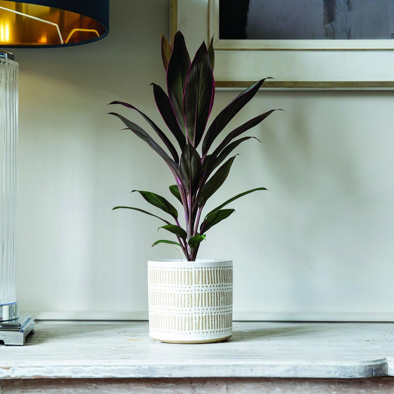 Finn Ceramic Indoor Pot Cover - Gardenesque