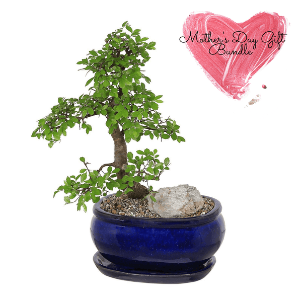 Bonsai Bundle - Blue Oval Pot, Decorative Pot Stones & Organic Compost