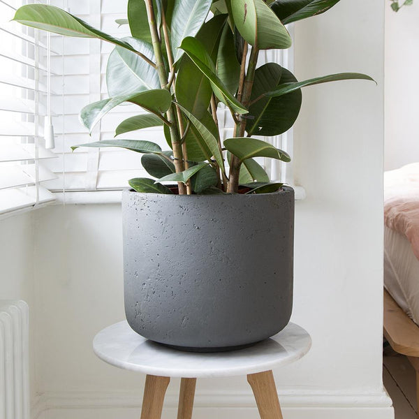 Larkin Concrete Indoor Pot Cover - Gardenesque