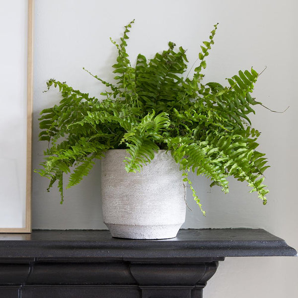 Clara Concrete Indoor Pot Cover - Gardenesque