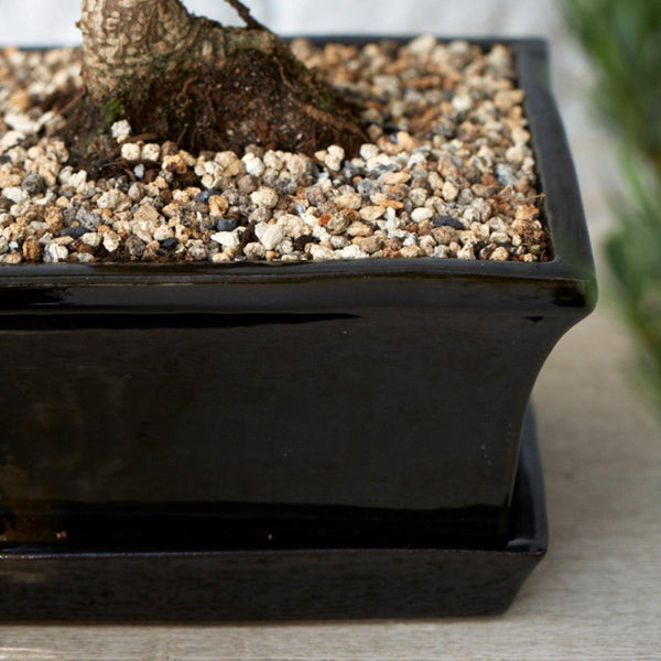 Black Ceramic Rectangular Bonsai Pot with Dish - Gardenesque