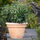 Brutus XXL Extra Thick Terracotta Garden Pot - 3 Sizes available at gardenesque