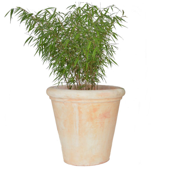 Julius XXL Large Tuscan Terracotta Garden Pot - Gardenesque