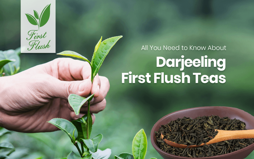 All You Need to Know About Darjeeling First Flush Tea