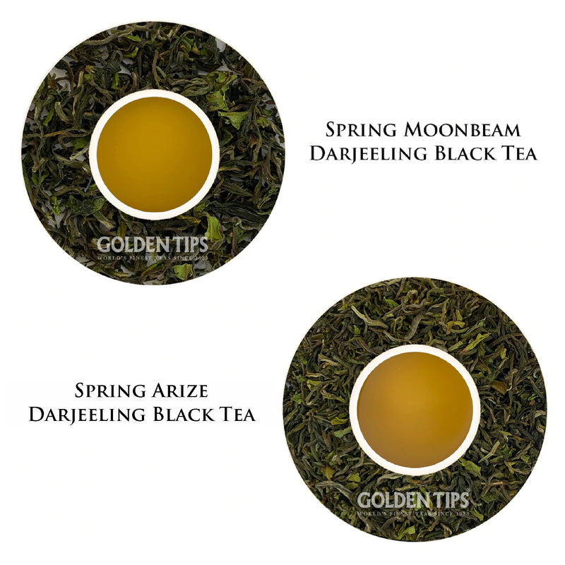 Mediterranean Glory Rosemary Green Tea - Golden Tips