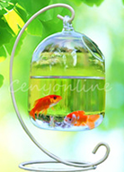 aquarium supplies wholesale,freshwater aquarium supplies,fish supplies near me,fish aquarium store near me,discount aquarium supplies,food for fish near me,pet fish for sale,fish tank supplies near me