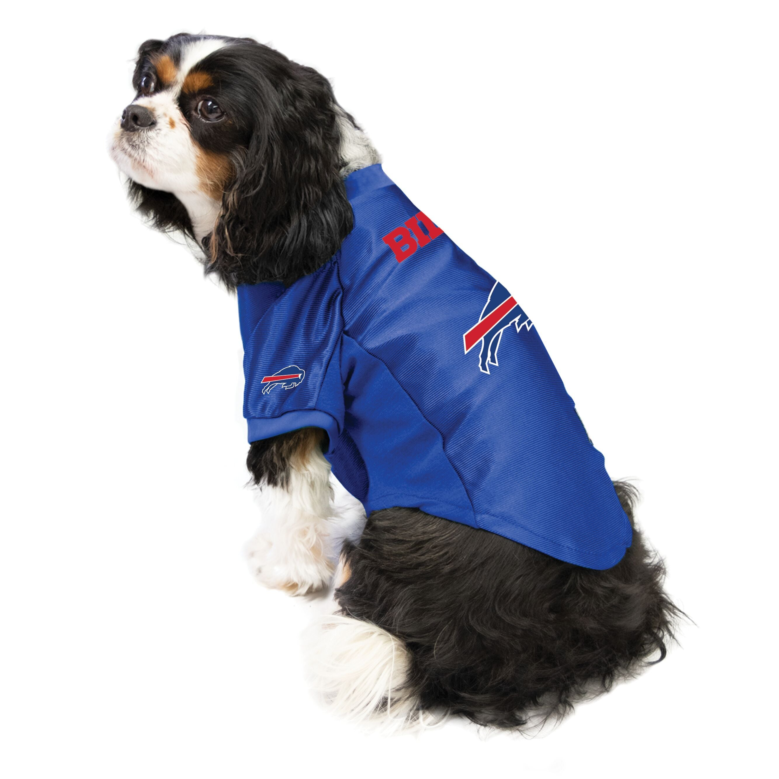 Bills outfit for dogs