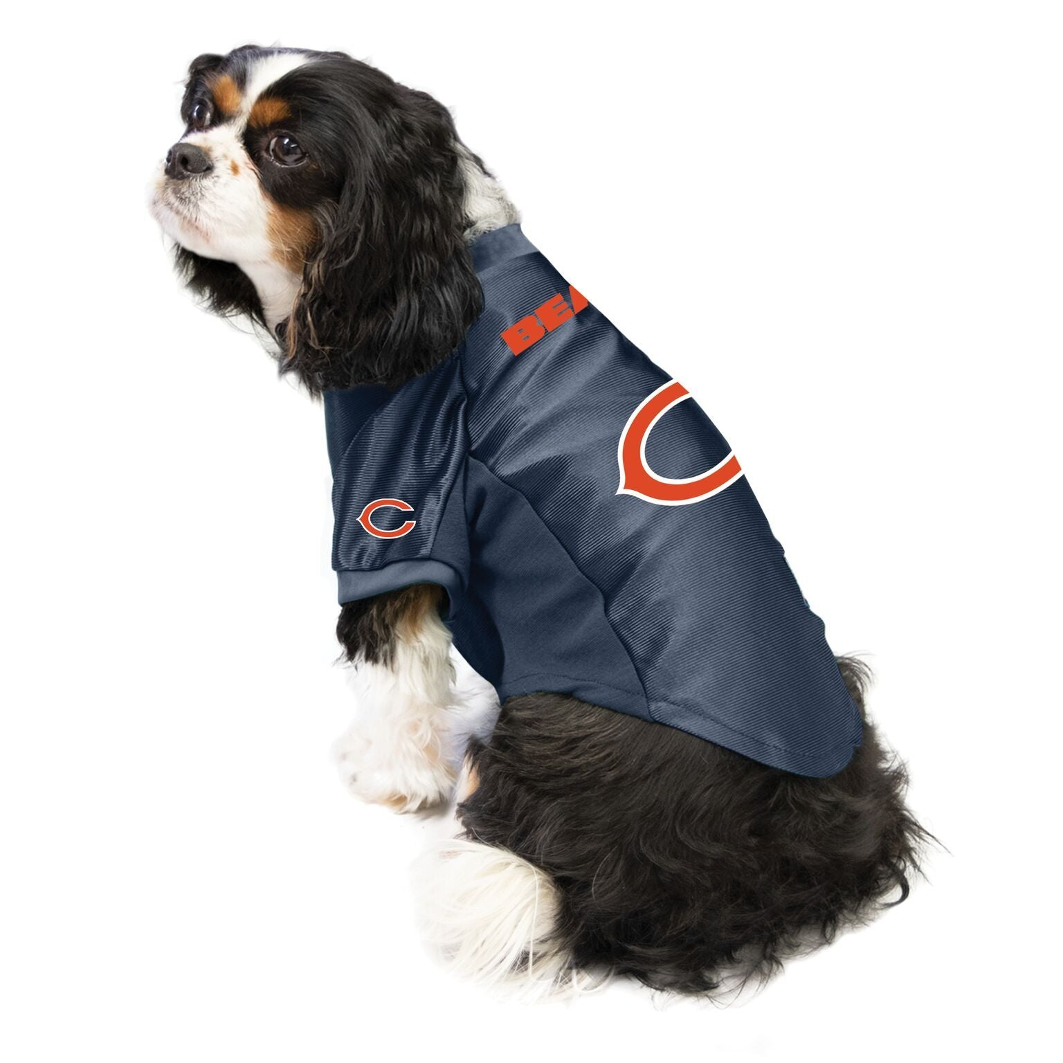 Bears Outfit for Dogs