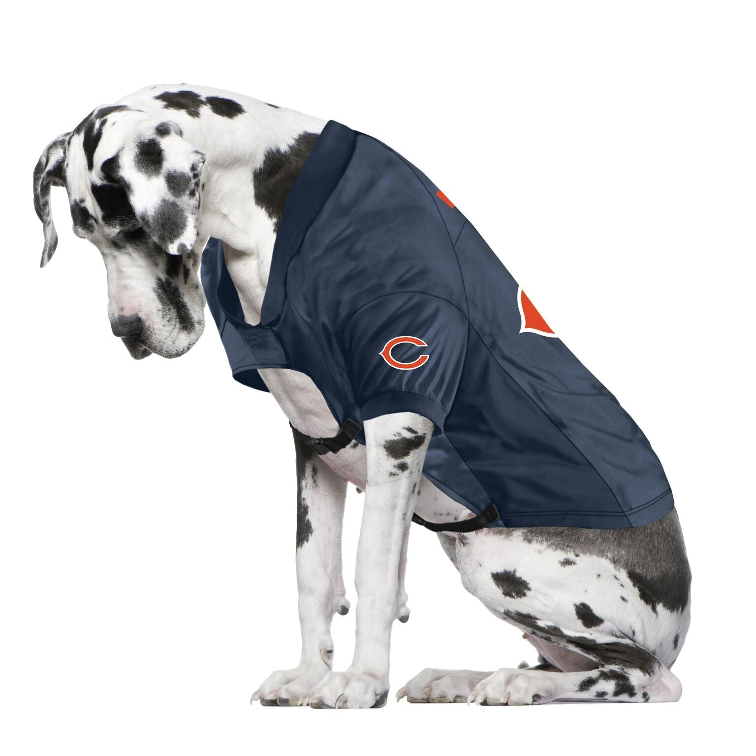 Bears fan jersey for your dog
