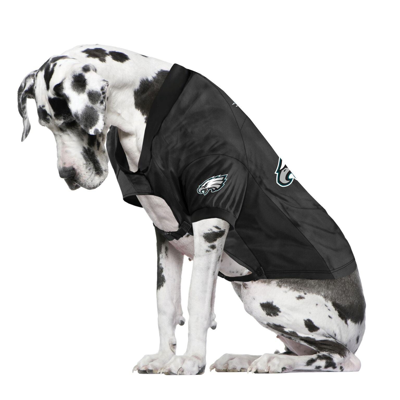 Eagles Fan Jersey For Your Dog