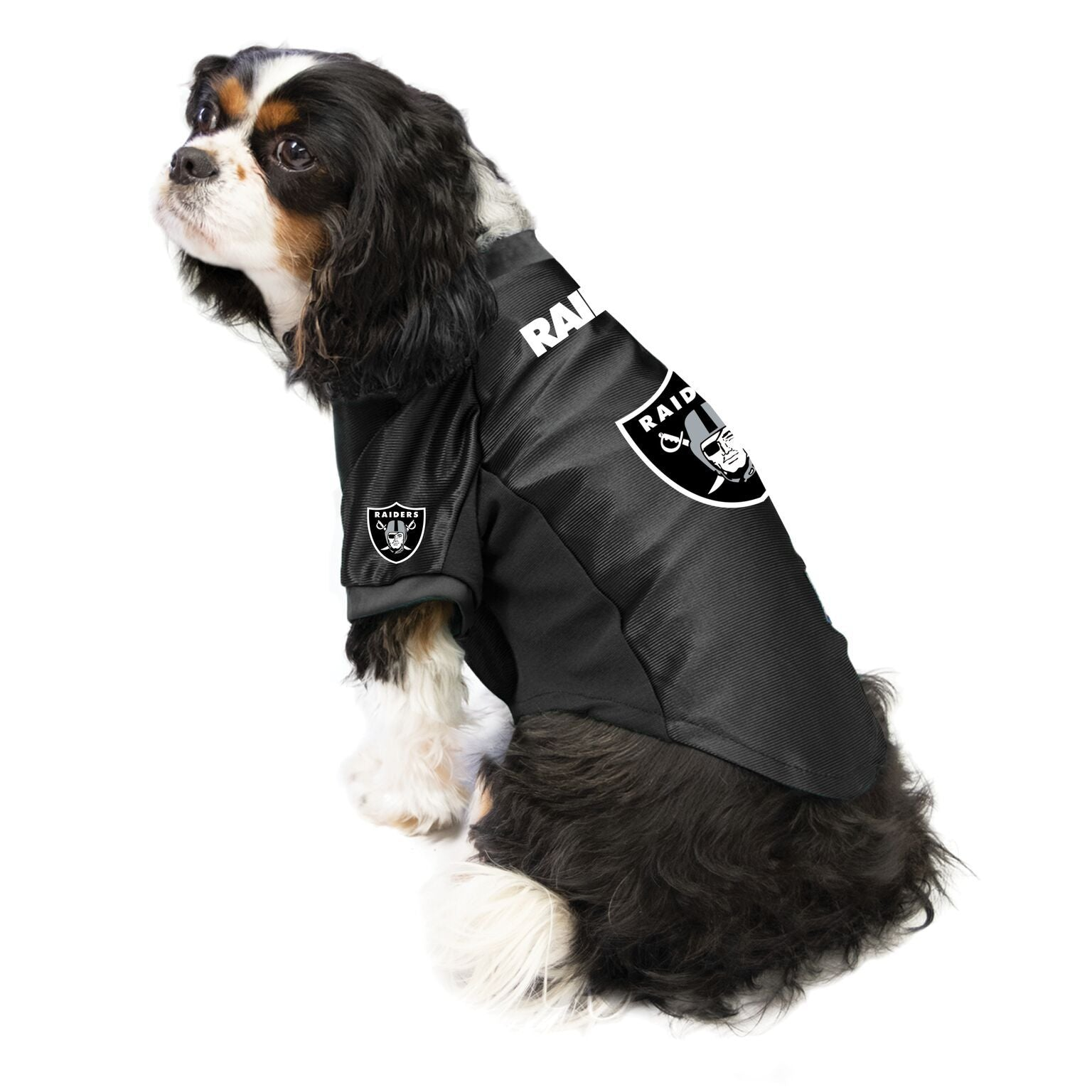 Raiders Outfit for Dogs