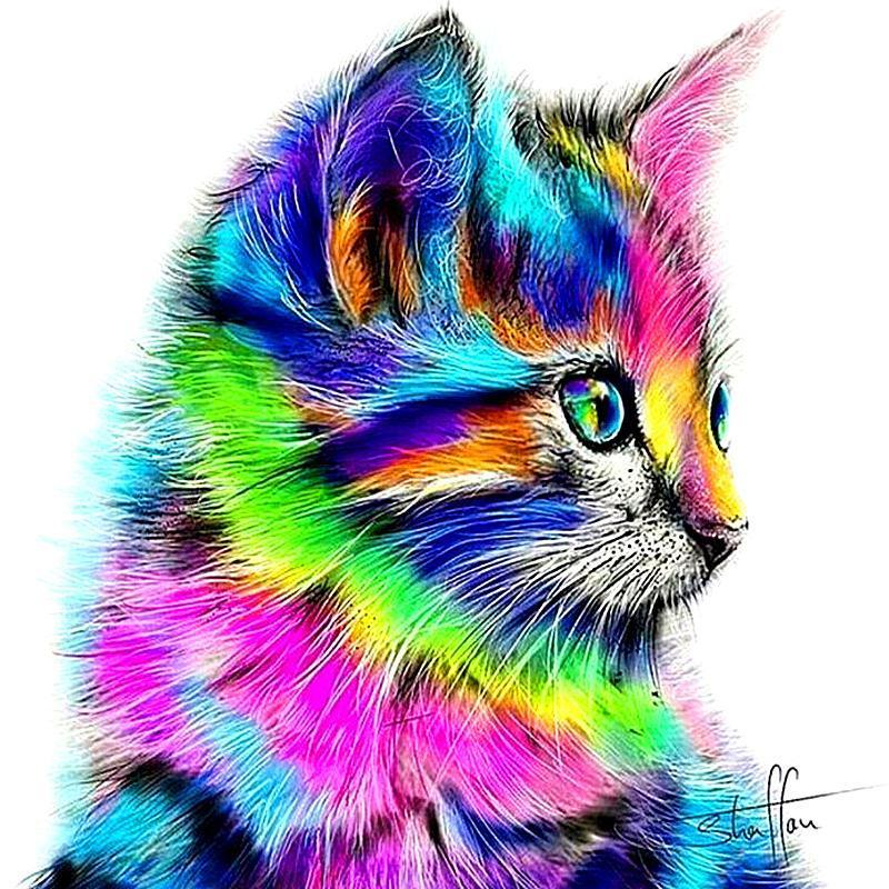 rainbow kitten gempaint kit gray matter