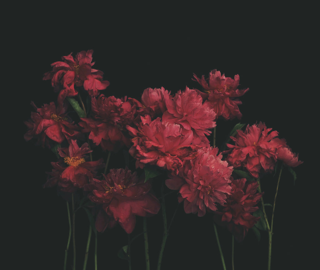 Ariella's Peonies - Ashley Woodson Bailey
