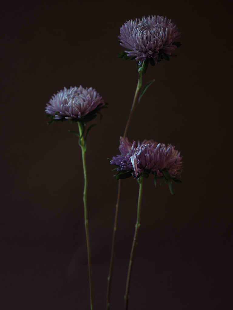 Asters - Ashley Woodson Bailey