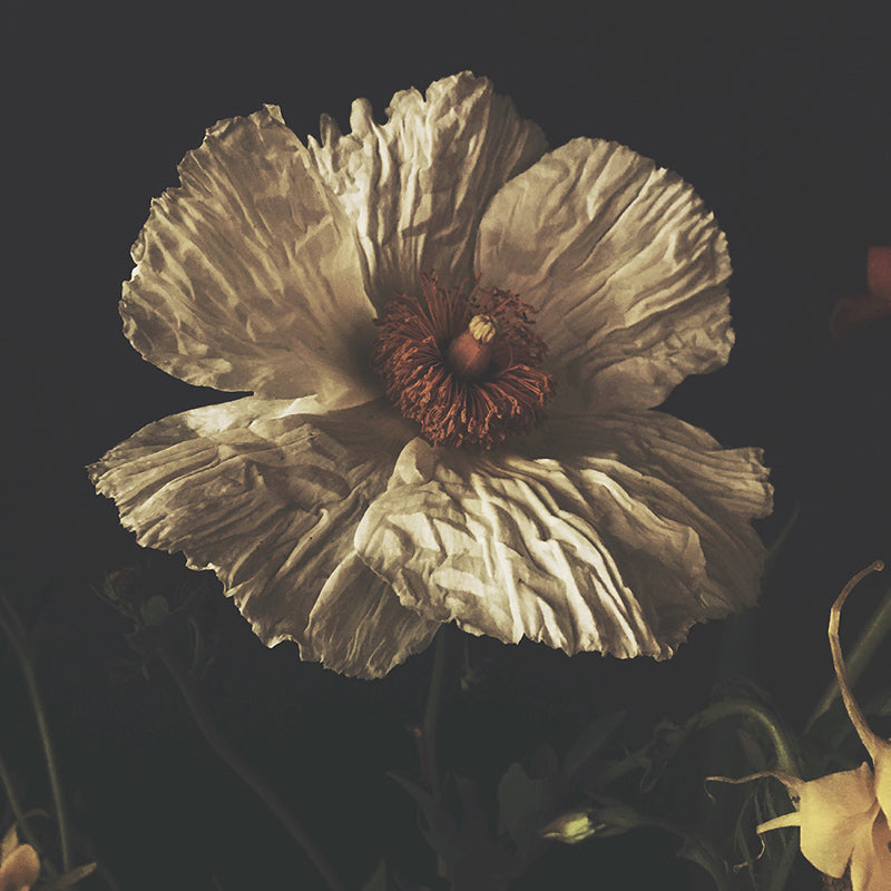 Tainted Love - Ashley Woodson Bailey