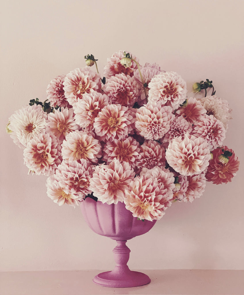 Pink Dahlias - Ashley Woodson Bailey