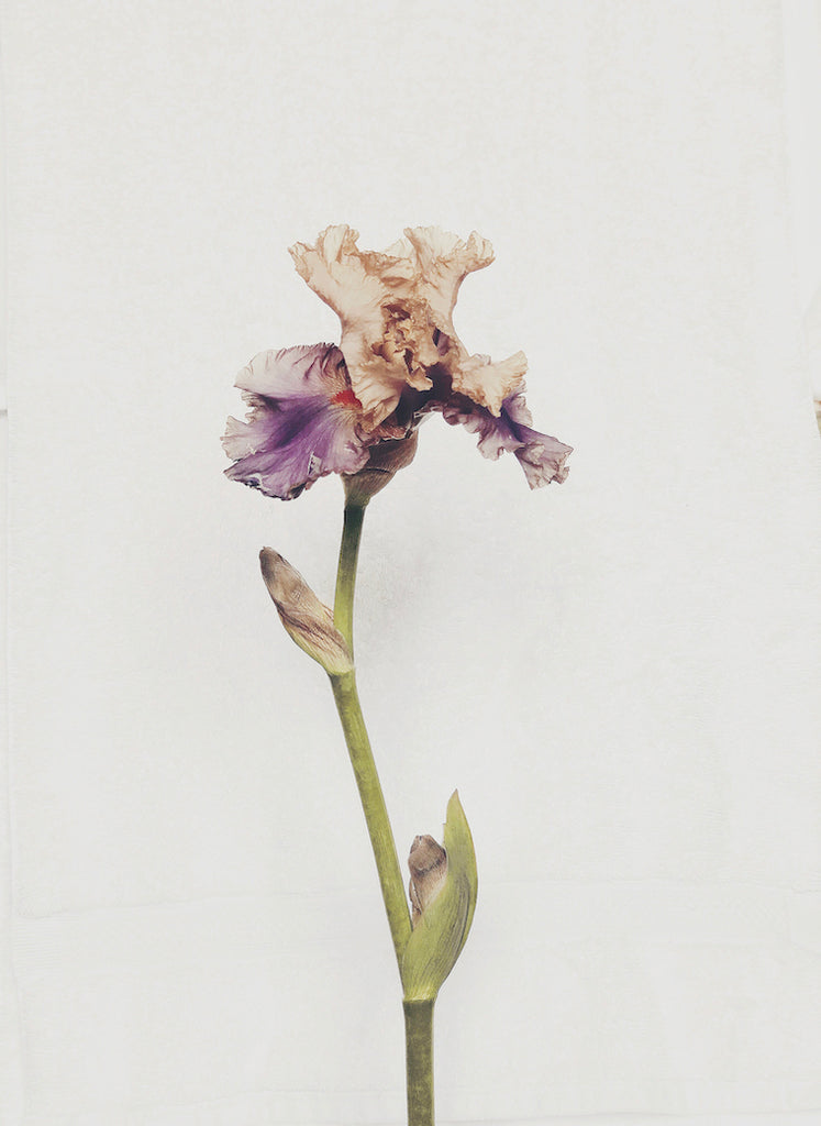 Iris - Ashley Woodson Bailey