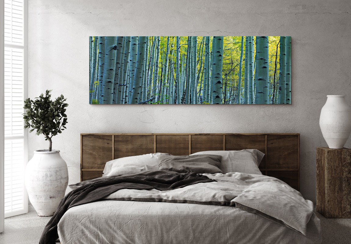 Endless Birches in Home