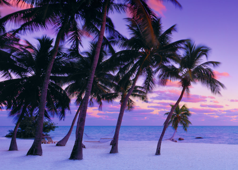 Palm trees on the white sand beaches of Islamorada Florida during a pink and purple sunset